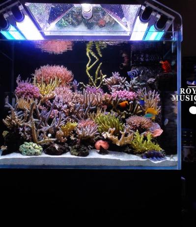 养水的重要性——珊瑚混养缸新手通往天堂的捷径!