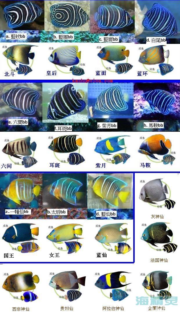 大仙成鱼与小鱼对照图