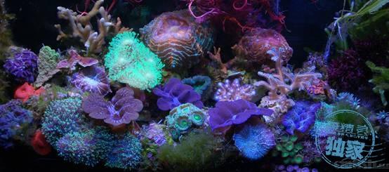 谈谈系列之五-测试指标很好,就是珊瑚状态不好