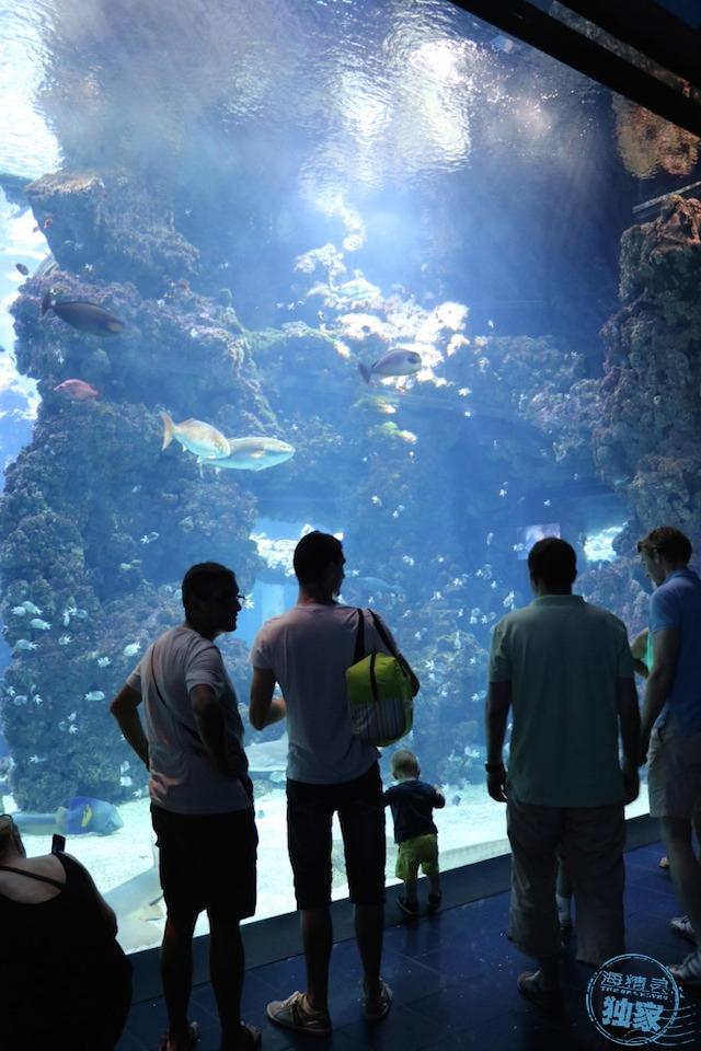 17_Shark-Lagoon_Vista2.jpg