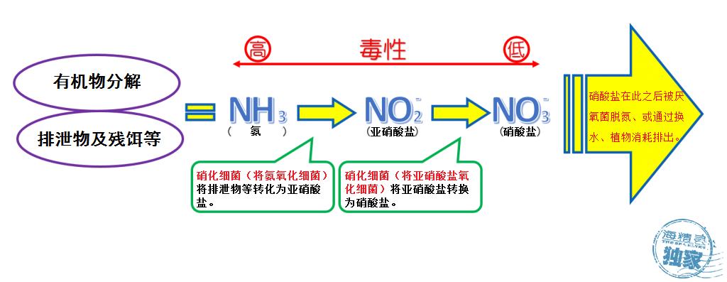 分解過程図-1024x397.png
