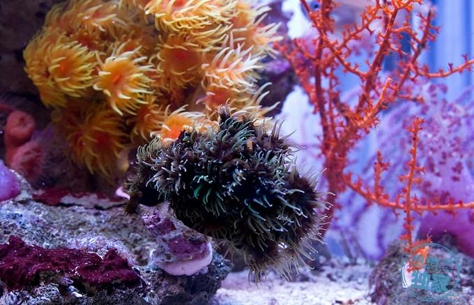 MG_1099-Reef-Builders.jpg